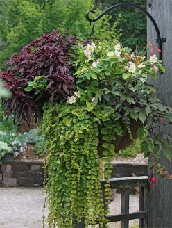 How to Create Sensational Pots and Planters, Container Gardening, Container Gardens: Gardener's Supply: Planter Ideas, Outdoor, Gardening Containers, Landscaping, Container Gardening, Shade Plants