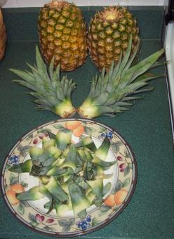 How to grow a pineapple from the core of the one you are eating...  If you'd like to learn how to grow a pineapple that will yield a sweet-tasting fruit, then you've come to the right place. This page is chock full of everything you need to know: