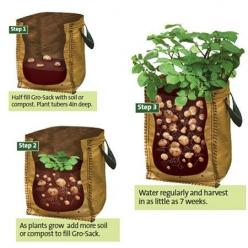 How to grow potatoes in a container: Sack, Garden Ideas, Potatoes Growing, Outdoor, Gardening, Growing Potatoes, Potato Growing, Bags, Grow Potatoes