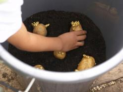 How to Grow Potatoes in Pots --> http://www.hgtvgardens.com/potatoes/how-to-grow-potatoes-in-pots?soc=pinterest: Plant Potatoes, Plastic Bin, Planting Potatoes, Potato Planting, Growing Potatoes, Pots Potatoes, Grow Potatoes