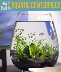 How To Make A Small BETA Fish Aquarium | Use a Small Fish Tank Aquarium to Create a Unique Centerpiece for the Home By DIY Ready. http://diyready.com/diy-projects-how-to-make-an-aquatic-table-centerpiece/: Fish Aquarium, Fishtanks, Small Fish Tanks, Uniqu