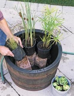 How to Make an Outdoor Water Garden - Outdoor Projects | Fresh Home: Garden Ideas, Container Water Gardens, Waterfeatures, Water Features, Gardening Ideas, Outdoor, Watergardens, Small Water, Diy