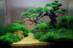 http://media-cache-ak0.pinimg.com/originals/1a/20/84/1a2084808823dc3691b3d1149eea0764.jpg: Tree, Fish Tanks, Aquascape Tanks, Aquascape Ideas, Fishtank, Aquascape Inspiration, Bonsai