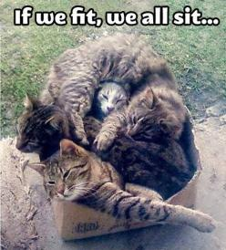 Humour animal, humor dogs, funny pics, hilariousness …For the funniest quotes and hilarious pictures visit www.bestfunnyjokes4u.com: Cats, Fit, Animals, Funny Cat, Boxes, Crazy Cat, Funny Animal, Kitty, Cat Lady
