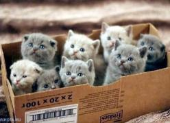 "hungariansoul: "" 9-more-lives: hahhh :D "": Crazy Cats, Lady Starter, Animals, Funny, Box, Kittens, Crazy Cat Lady, Kitty"