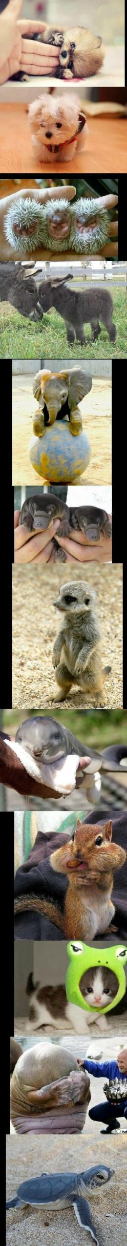 I'll take one of each, please.: Babies, Cute Baby Animals, Baby Animals So, Cute Animals, Cute Babies, Animal Babies