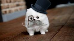 I can't even move after looking at this. No words. Only squeals and high pitched noises available.: Animals, Dogs, Stuff, Funny, Puppy, Top Hats, Things, Smile, Mustache
