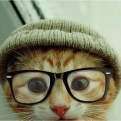 I have no idea why this appeals to me. I appologize. Thank you 8Tracks.: Cats, Hipster Cat, Kitten, Animals, Hipster Kitty, Pet, Funny, Things, Hipstercat