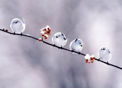 I just <3 these little birds!: Snow Birds, Animals, Winter, Sweet, Nature, Little Birds, Things, Photo