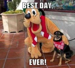 I love that the dog looks like it is smiling... haha: Animals, Dogs, Best Day Ever, Funny Animal, Disney, Smile, Funnie