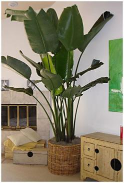 I love this post because I have every one of these plants. It's very accurate information and has helped me with one of the problems I was having with my palm before it too bad #determinedtohaveagreenthumb: Tropical Indoor, Indoor Palm Plant, Plants I