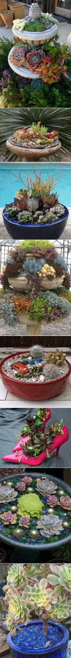 I need to do something like this for my husband. He loves succulents, especially the little chickens.: Succulents Garden, Garden Ideas, Cactus Succulents, Amazing Succulents, Ideas Succulents, Succulent Arrangement