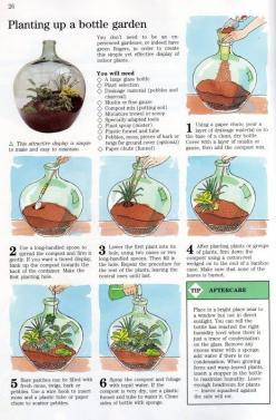 I remember these being popular in the 70's ~ everything old is new again ;D: Garden Ideas, Craft, Stuff, Green, Gardening, Bottle Gardens, Terrarium, Plants In Bottles Diy