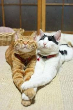 I thought 2 cats hangin out would be cool...my cat didn't think so. Look what he missed out on. lol: Cats, Animals, Kitty Cat, Best Friends, Sweet, Pet, Cute Cat, Bff, Smile