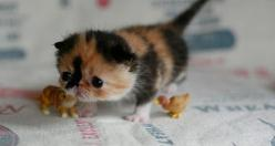 I usually don't like kittens with smooshed faces, but this one is an exception. It is so cute!!! It looks so sad and in need of a hug!!!: Cats, So Cute, Pets, Adorable, Baby Animals, Kittens, Things, Kitty