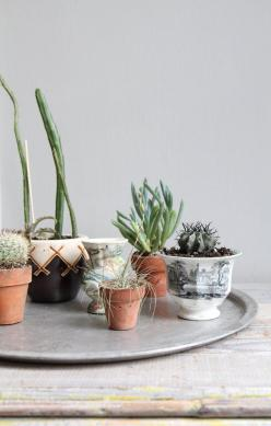 I want to grow plants meant for my climate - way more eco-friendly than trying to make pansies thrive in the desert!  Cool Ideas!: Decor, Interior, Succulent, Can, Green, Garden, Flower, Cactus, Indoor Plants
