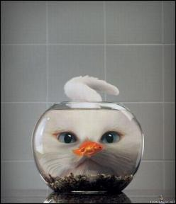 I will have three cats, named Plato, Earl Grey, and Coricopat. This, I think, is Coricopat.: Cats, Picture, Animals, Fish, Funny, Things, Smile, Kitty, Photo