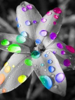 I wonder if I could do something similar with Photoshop to a photo of mine.: Colour, Picture, Colors, Art, Rainbows, Color Splash, Flowers, Photo