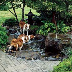 I would like something like this in my backyard for my water-loving dog. Small and shallow and secluded and relaxing. To dip my toes in, too.: Water Feature, Pond Idea, Dog Friendly Garden, Dog Friendly Backyard, Backyard Fountain, Water Garden, Water Lov