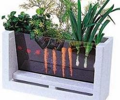 : Idea, For Kids, Rootvue Farm, Science Experiment, Watch, Veggies Grow, Gardens, Garden Laboratory