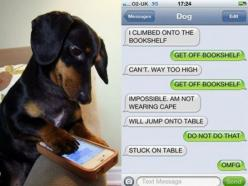 If Dogs Could Text The Conversations Would Be Like This (10 Photos): Dogs, Dachshund, Doxie, Dog Texts, Funny, Text Messages, 10 Photos, Animal, Text Conversations