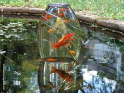 If I ever have a pond with fish again I want to try it. It would probably drive my cats crazy though LOL  (Use a heavy glass vase and invert it on some concrete blocks so they can swim in from the bottom. Submerge the vase and turn it up under water so th