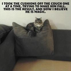 If These Pics Don't Make You Laugh, You Might Have A Serious Case Of Kristen Stewart – 37 Pics: Funny Animals, Cats, Giggle, Funny Stuff, Crazy Cat, Humor, Funnies