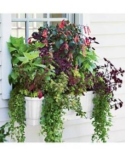 If you are a gardener and like window boxes but hate constant watering......BEST product!!! self watering.... fill as needed..... Great for those hot july months!!!: Garage Windows, Boring Windows, Kitchen Windows, Window Planters, Bedroom, Window Boxes,