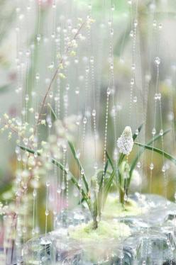 If you are always trying to be normal, you can never find out how amazing you can be. -anonymous: Nature, Dream, Raindrops, Rain Drops, Dew Drops, Spring, Flower, Photography