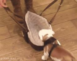 If You Can Get Through This Post Without Going 'Awww,' You Have a Heart of Ice! | moviepilot.com: Fit, Aww, Dogs Puppy S Animals, Pets, Things, Funny Gif, Ready
