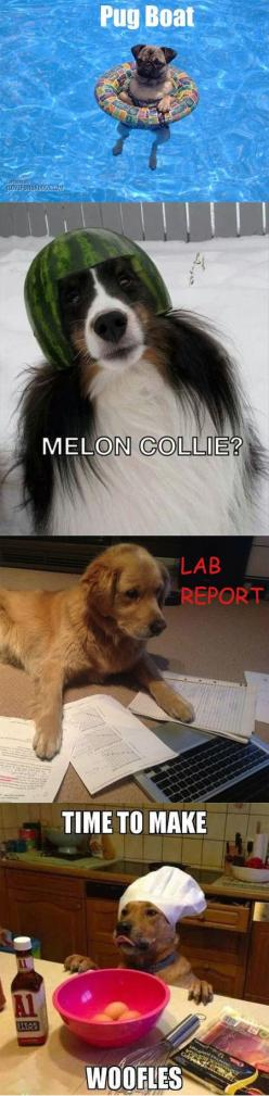 If you're a word nerd and a dog lover like I am, you'll find these dog puns particularly amusing. From the silly to the downright hilarious, these dog puns are gleaned from the fabulous and deep world of pun-filled Tumblr.: Dog Pun, Animal Pun, Funny Pun,