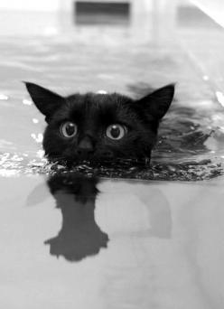 If you saw this dude swimming towards you, on Halloween night, LISTEN UP! It's just a superstition...maybe or maybe not...NOT UNTIL IT HAPPENS TO YOU! :): Kitten, Animals, Keep Swimming, Black Cats, Swimming Cat, Blackcats, Kitty