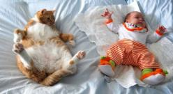 Is this how you do it? Haha adorable!: Cats, Copy Cat, Babies, Animals, Pet, Fat Cat, Funny, Funnies, Photo