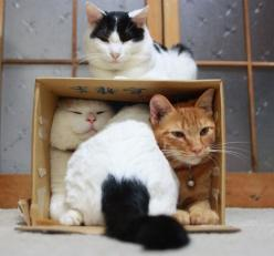 Isn't it funny how much cats love cardboard boxes!This looks like my house.: Cats, Animals, Cardboard Boxes, Cat Love, Cat Trap, Kitty, Room