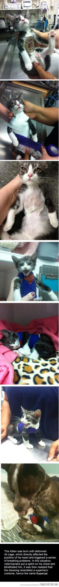 It's a bird… It's a plane… It's Supercat!  (I don't see any blindfold in any of these pictures, so I'm not sure what that's referring to. BUT these pictures are so sweet, bless the vet staff for taking such good care of this sweet baby.): Cats