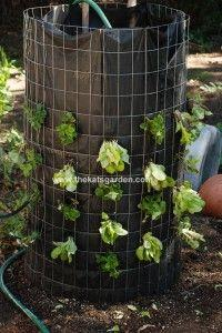 It's Vertical Lettuce For Me!: Tower Planted, Garden Ideas, Lettuce Garden, Lettuce Tower, Outdoor, Growing Vertical, Vertical Lettuce, Vegetable Garden