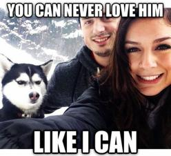 Jealous Husky // funny pictures - funny photos - funny images - funny pics - funny quotes - #lol #humor #funnypictures: Face, Animals, Dogs, Funny Pictures, Husky, Funny Stuff, Humor, Funnies