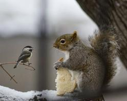 "Just a crumb please!!!……..DON'T WORRY, ""SARAH SQUIRREL"" GAVE LITTLE ""BERTHA BIRD"" A BIG CHUNK OF HER SLICE OF BREAD……..THEY DON'T CALL HER ""SARAH THE SHARER"" FOR NOTHING, YA KNOW!!!……….ccp: Animals, Sweet, Friends, Nature,"