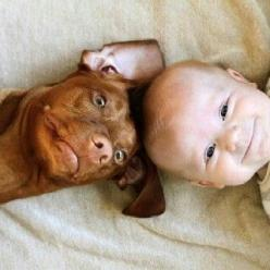 Just adorable! Look at the sweet faces on the happy baby and dog (the dogs ear! so cute).: Dog Baby, Happy Baby, Best Friends, Pitbull, Adorable Babies, Funny Faces, Dog Awww, Animal