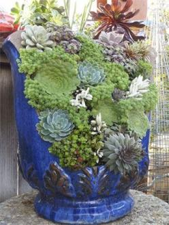 Just because it's broken doesn't mean it's useless! Your broken containers can still hold beautiful plants!: Succulents Garden, Broken Pots, Garden Ideas, Broken Container, Outdoor, Gardens, Flower, Container Gardening