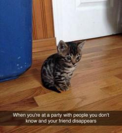 Just gonna stand here...: Cats, Animals, Quote, Funny, So True, Funnies, Friend