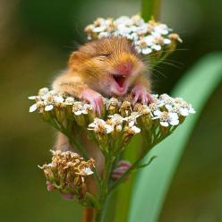 Just what I needed this morning :) The 30 Happiest Animals In The World That Will Make You Smile: Animals, So Cute, Happy, Funny, Adorable, Things, Smile, Photo, Flower