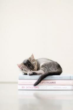 "kitten curled up asleep on a stack of books, ""cat's pajamas"", ""101 cataclysms"" & ""smitten"": Cats, Kitty Cat, Animals, Sweet, Cat Nap, Book, Kittens, Cat Lady"