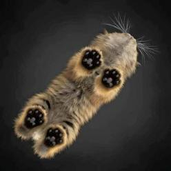 Kitten from underneath | cats & kittens: Cat Paw, Kitty Cats, Animals, Kitten Feet, Kitty Kitty, Kittens, Photo, Glass Tables