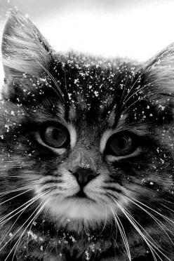 kitten in snow: Cats Cats, Kitty Cats, Lovely Animals, Beautiful Cats, Black And White Kitten, Kittens Cats, Cats Kittens