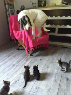 Kittens sure can scare a dog.: Scary, Cats, Animals, Dogs, Stuff, Pets, Funny Animal, Kittens, Photo