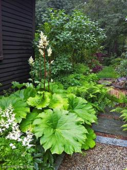 Large foliage for large contrast in your garden: Flowerbed Garden, Planting Combinations, Yard, Outdoor, Shade Garden Plants, Shrub, Garden, Shade Garden Ideas