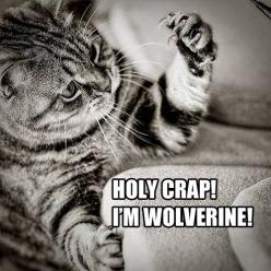 Laughed a little more than I probably should have....: Cats, Animals, I M Wolverine, Funny Cat, Wolverines, Crazy Cat, Funny Animal, Kitty, Holy Crap