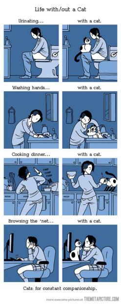 Life with a cat…thankfully I don't have to worry about the counters, but the rest is so true!: Life With Out, Cats, Animals, Funny, So True, Crazy Cat, Kitty, Cat Lady