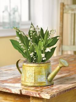 Lily of the Valley Bulb Basket - Convallaria Bulbs | Gardeners.com. I don't need the container just want Lily of Valley plants or seeds at least.: Convallaria Bulbs, Bulb Basket, Valley Bulb, Gift, Lily Of The Valley, Lilies, Baskets, Things